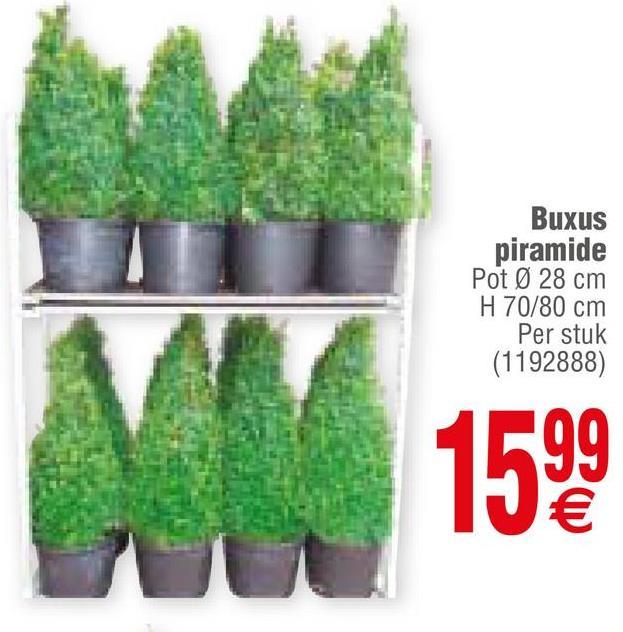 Buxus piramide Pot Ø 28 cm H 70/80 cm Per stuk (1192888) 00