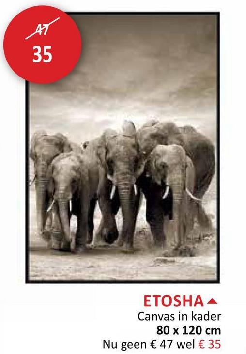 ETOSHA A Canvas in kader 80 x 120 cm Nu geen € 47 wel € 35