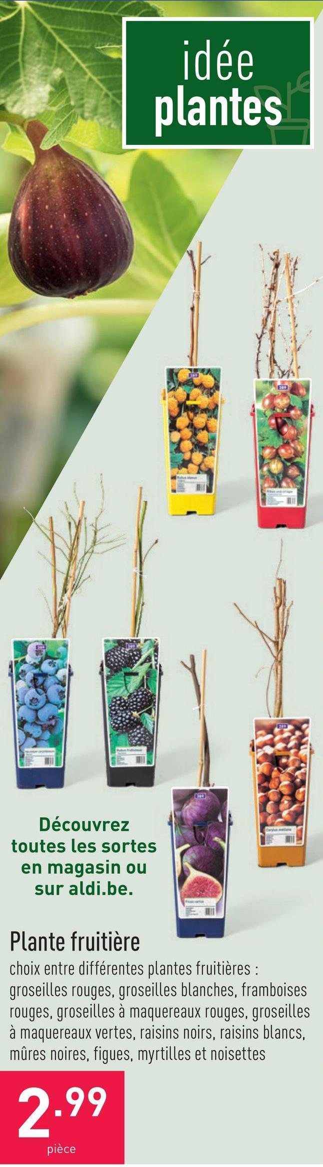 Plante fruitière choix entre différentes plantes fruitières : groseilles rouges, groseilles blanches, framboises rouges, groseilles à maquereaux rouges, groseilles à maquereaux vertes, raisins noirs, raisins blancs, mûres noires, figues, myrtilles et noisettes