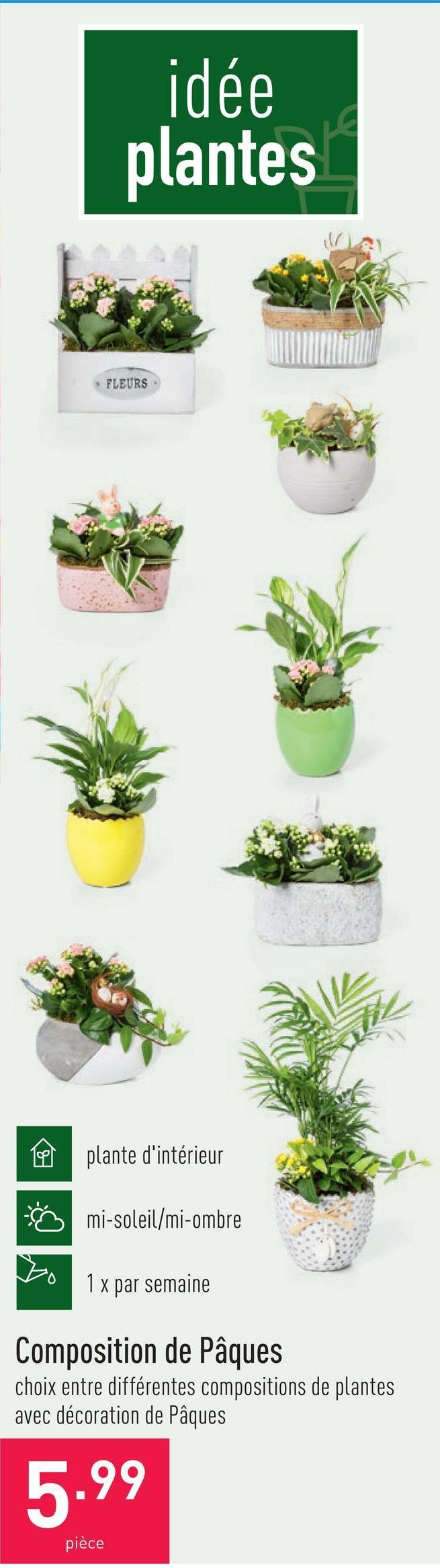 Composition de Pâques choix entre différentes compositions de plantes avec décoration de Pâques, plante d'intérieur, mi-soleil/mi-ombre, arroser 1 x par semaine