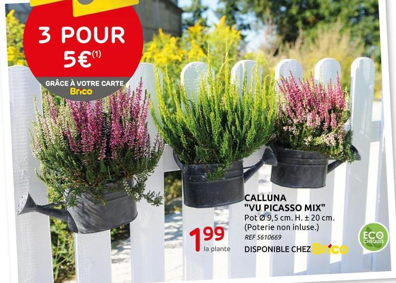 """3 POUR 5€ (1) GRÂCE À VOTRE CARTE Brico CALLUNA """"VU PICASSO MIX"""" Pot Ø 9,5 cm. H. + 20 cm. (Poterie non inluse.) REF 5610669 DISPONIBLE CHEZ ECO 1.99 CHEQUES la plante"""