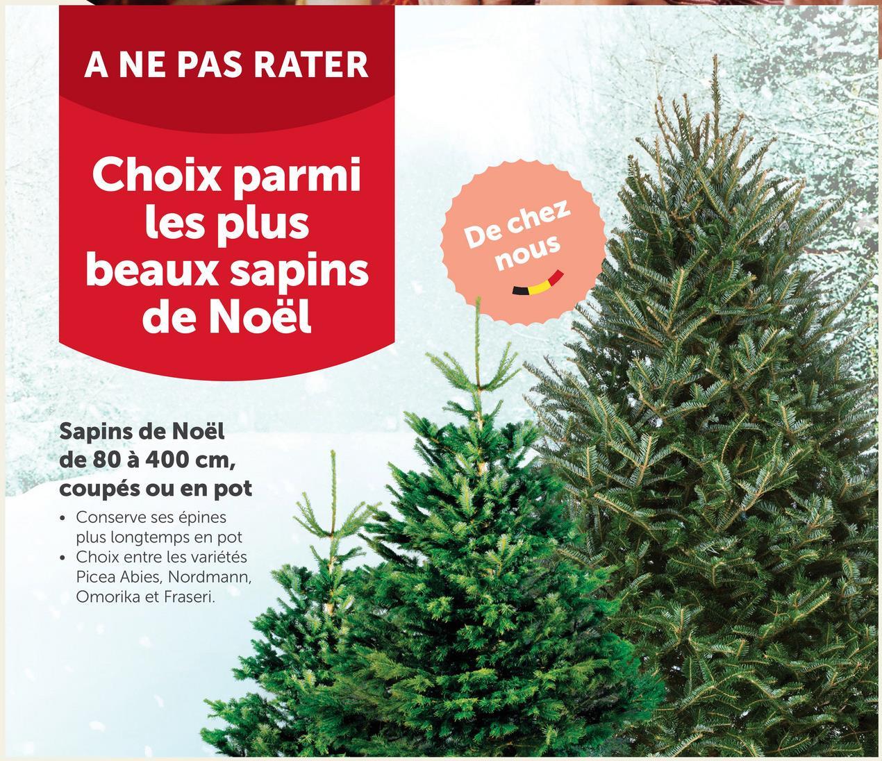 A NE PAS RATER Choix parmi les plus beaux sapins de Noël De chez nous MONE Sapins de Noël de 80 à 400 cm, coupés ou en pot Conserve ses épines plus longtemps en pot • Choix entre les variétés Picea Abies, Nordmann, Omorika et Fraseri. .