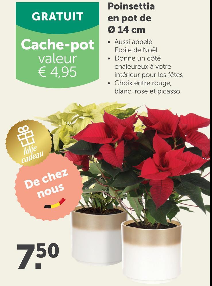 GRATUIT Cache-pot valeur € 4,95 Poinsettia en pot de Ø 14 cm • Aussi appelé Etoile de Noël • Donne un côté chaleureux à votre intérieur pour les fêtes • Choix entre rouge, blanc, rose et picasso Idée cadeau De chez nous 750